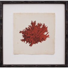 Mini Red Coral II Framed Graphic Art