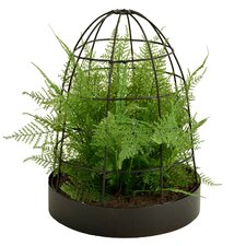 Asparagus Fern Housed in Unique Metal Cage