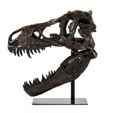 Dinosaur Skull with Base Wall Décor