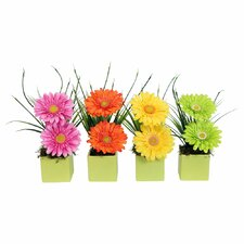 Floral Gerbera Daisy in Lime Cube (Set of 4)