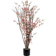 Blossom Tree in Pot