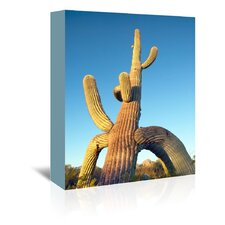 Tripod Saguaro #5 Photographic Print on Wrapped Canvas