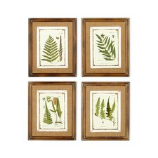 French Market Fern 4 Piece Framed Graphic Art (Set of 4)
