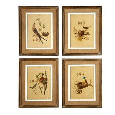 French Market Nested Bird 4 Piece Framed Graphic Art Set (Set of 4)
