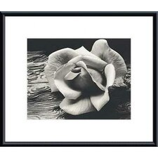 Rose and Driftwood by Ansel Adams Framed Photographic Print