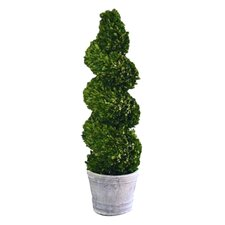 Boxwood Spiral Topiary in Pot
