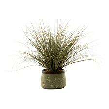Onion Grass in Oblong Ceramic Planter