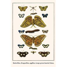 'Butterflies Dragonflies Eggflies Large Green-Banded Blues,' by Albertus Seba Graphic Art