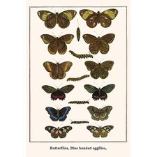 'Butterflies Blue Banded Eggflies,' by Albertus Seba Graphic Art