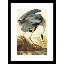 Great Blue Heron Framed Painting Print