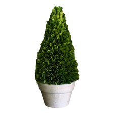 Green Boxwood Cone Topiary in Pot (Set of 2)