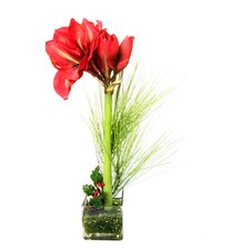 Faux Amaryllis with Pine and Holly