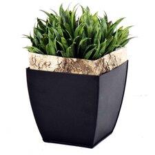 Rye Grass And Bark in Zinc Planter