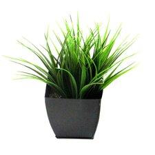 Vanilla Grass in Zinc Planter