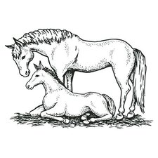 Mounted Rubber Mare & Colt Stamp (Set of 2)