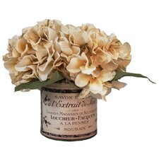 Cream Hydrangea in French Pot