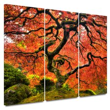 'Japanese Maple Tree' by John Black 3 Piece Painting Print on Canvas Set