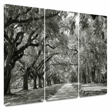 'Live Oak Avenue' by Steve Ainsworth 3 Piece Photographic Print Gallery-Wrapped on Canvas Set