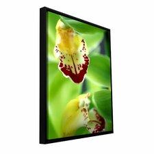 'Cymbidium Sea Foam Emerald Orchid' by Kathy Yates Photographic Print Floater Framed