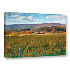 Vineyard In Autumn by Steve Ainsworth Photographic Print on Gallery Wrapped Canvas