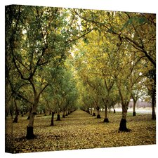 Fall Orchard by Kathy Yates Photographic Print on Canvas Art