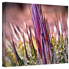 Agave Photographic Print on Canvas by Mark Ross