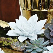Succulent in Porcelain