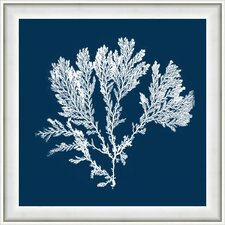 Coral I Framed Graphic Art in Navy