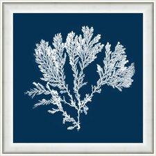 Navy Coral I Framed Graphic Art