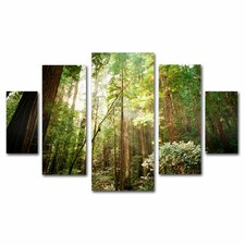 'Muir Woods' by Ariane Moshayed 5 Piece Photographic Print on Wrapped Canvas Set