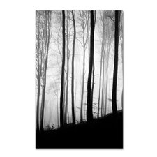 """""""Black Lines"""" by Philippe Sainte-Laudy Photographic Print on Wrapped Canvas"""