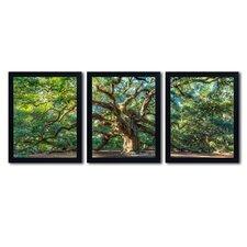 Angel Oak Charleston by Pierre Leclerc 3 Piece Framed Photographic Print Set