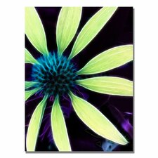 'Lime Green Coneflower' by Kathie McCurdy Graphic Art on Canvas