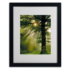 """""""Magical Tree"""" by Kathie McCurdy Framed Photographic Print"""