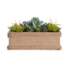 Succulents in Hemp Rope Container