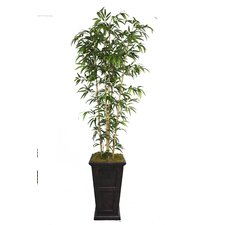 Tall Bamboo Tree in Decorative Vase