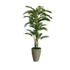 Tall Palm Tree in Planter