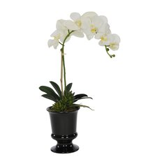 Artificial Phalaenopsis Orchid in Urn