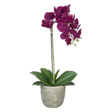 Single-Stem Orchid in Gray Stone-Look Vase