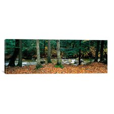 Panoramic White Mountain National Forest, New Hampshire Photographic Print on Canvas