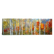 Panoramic Fall Trees, Shinhodaka, Gifu, Japan Photographic Print on Canvas