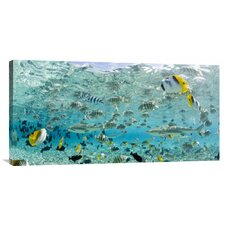 Blacktip Sharks and Tropical Fish in Bora-Bora Lagoon by Michele Westmorland on Canvas