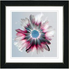 Winter Daisy by Zhee Singer Framed Painting Print in Crimson