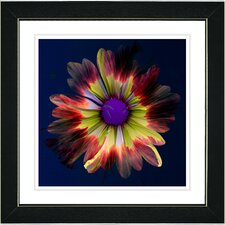 """Fire Flower"" by Zhee Singer Framed Fine Art Giclee Painting Print"