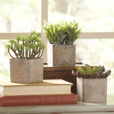 Square Potted Faux Succulents (Set of 3)