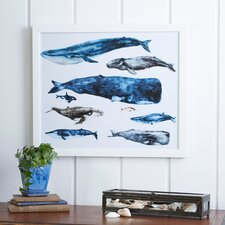 Whale Study Framed Print