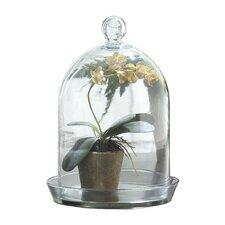 Glass Bell Jar Terrarium