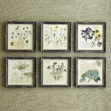 Pressed Flowers Wall Art (Set of 6)