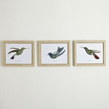 Hummingbird Framed Print Collection