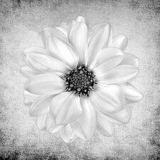 """""""White Iris"""" Canvas Art"""